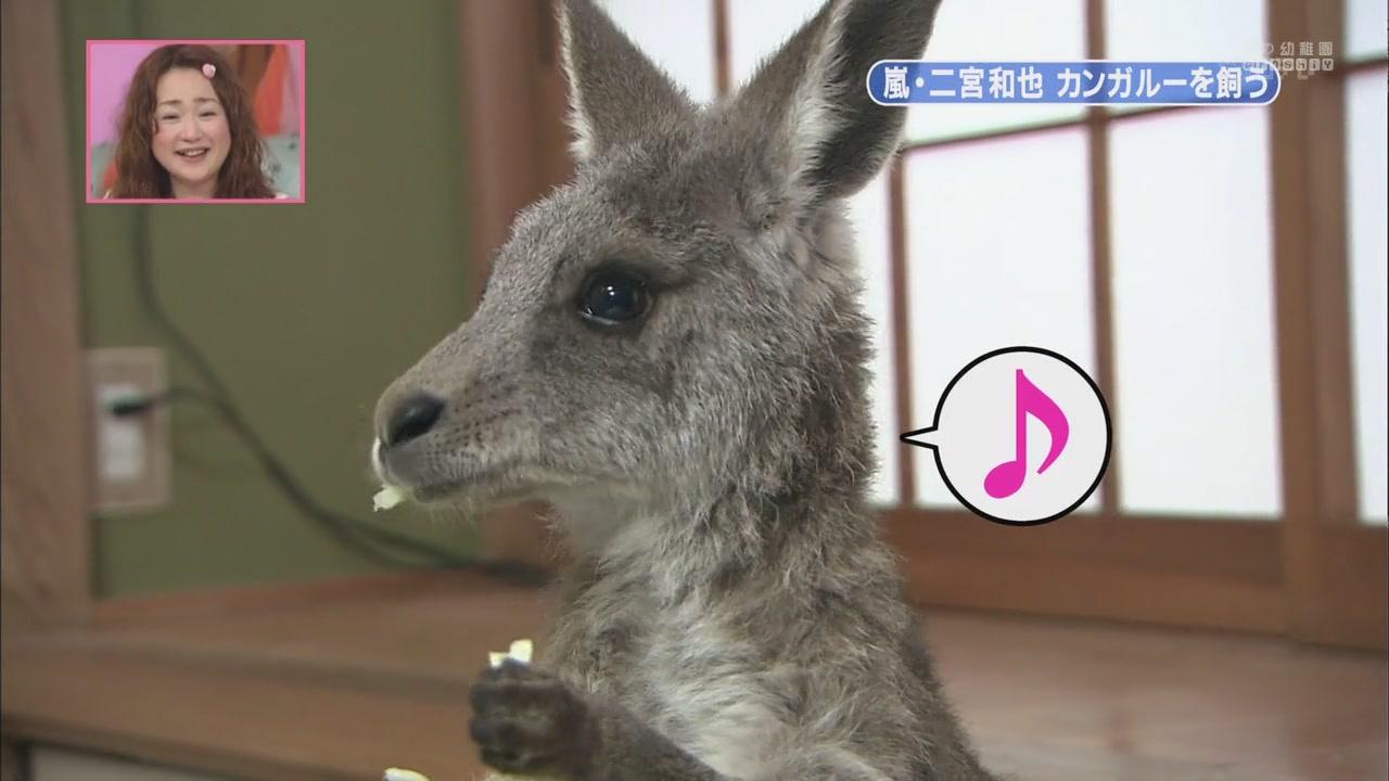 [[HDTV] 110122 天才!志村どうぶつ園(二宮和也)[18-28-08].JPG