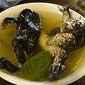 蒜頭青蛙湯2.JPG