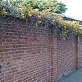 圍牆.JPG