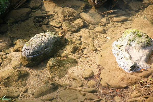石子溪2.JPG