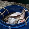 到南方澳漁港搶魚去8.JPG