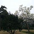 杭州植物園5