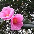 杭州植物園9