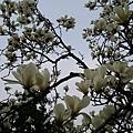 杭州植物園7