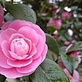 杭州植物園11