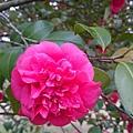 杭州植物園8