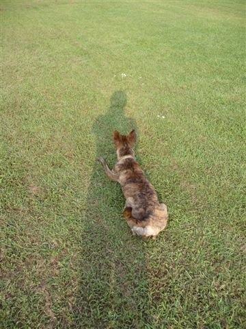 【小虎日記】在公園的隨意晃晃@小虎3
