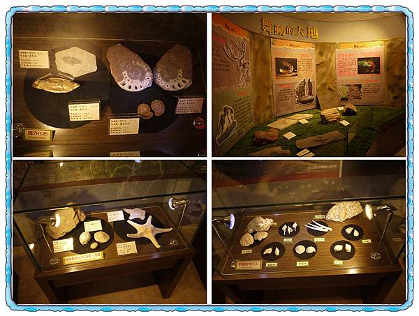 003 化石們.jpg