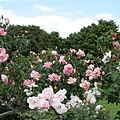 植物園1107-2