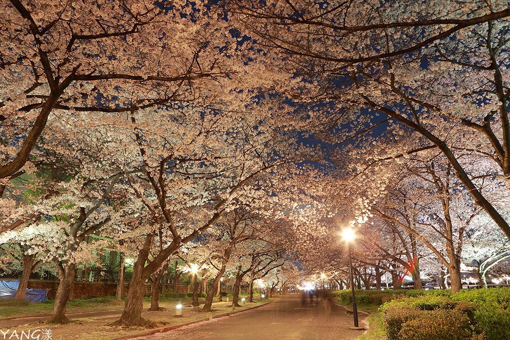 毛馬櫻之宮公園
