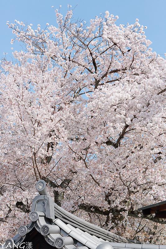 京都醍醐寺
