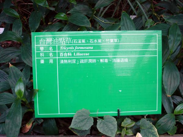 台中科博館-藥草園