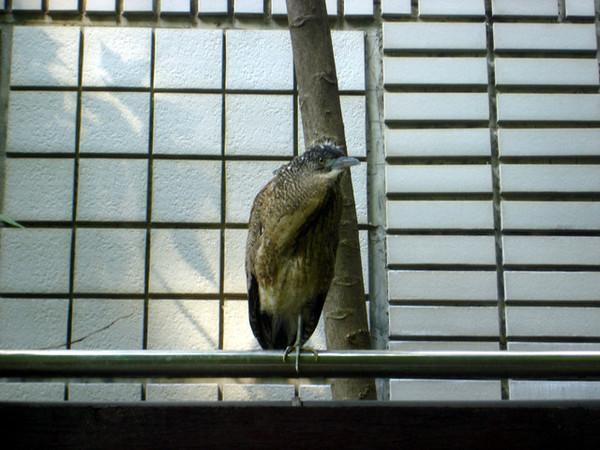 不知名的鳥類