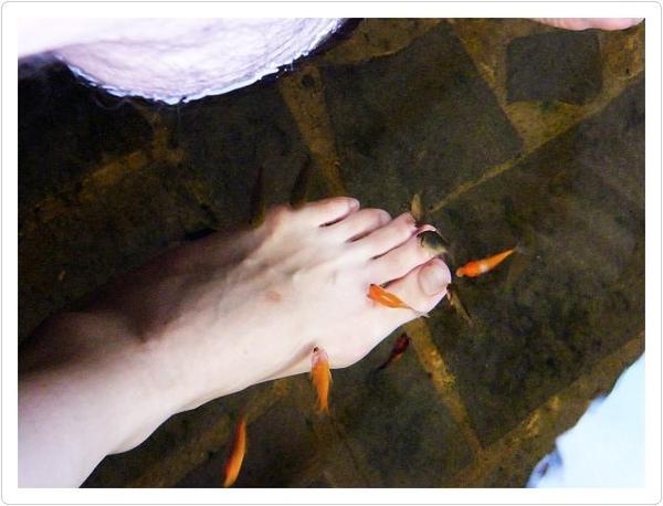 足浴-溫泉魚瘋狂吃腳皮