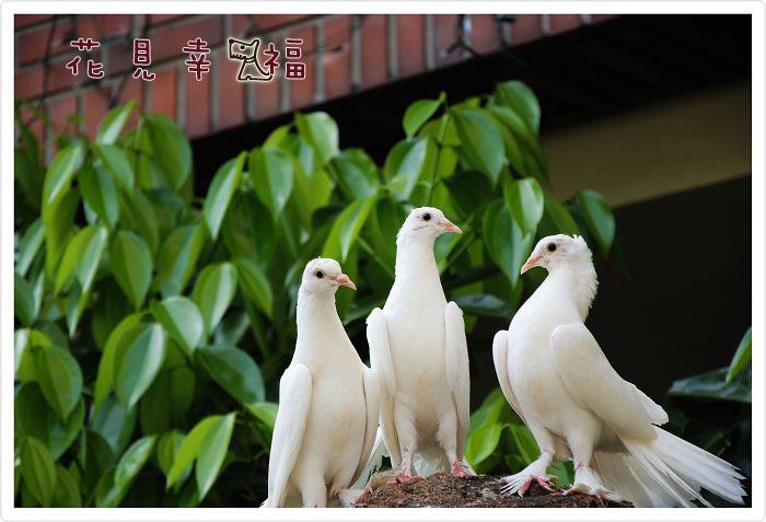 三隻鳥02.jpg