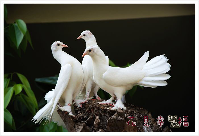 三隻鳥01.jpg