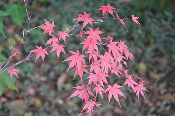 日本日光箱根 022.jpg