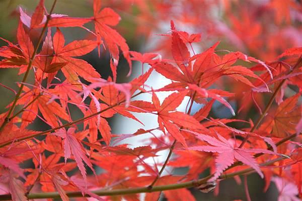 日本日光箱根 032.jpg