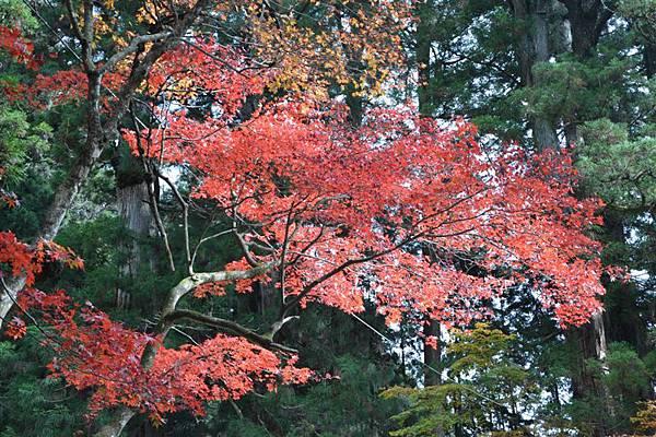 日本日光箱根 164.jpg