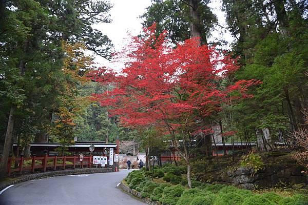 日本日光箱根 178.jpg