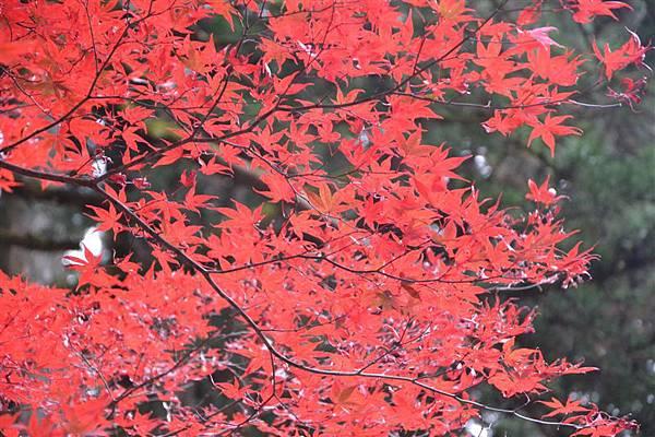 日本日光箱根 181.jpg