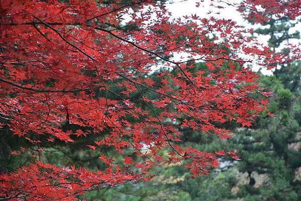 日本日光箱根 187.jpg