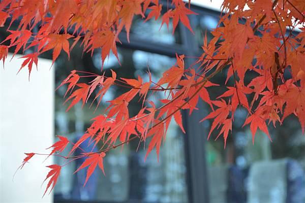 日本日光箱根 229.jpg