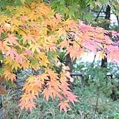日本日光箱根 810.jpg
