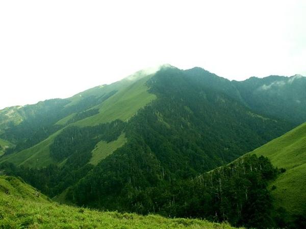 合歡山2-箭竹林及冷杉-950722合歡山.jpg