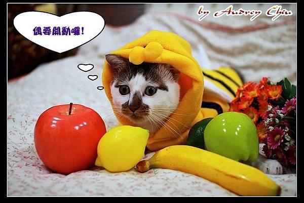 09_IMG_8546_享用大餐.jpg