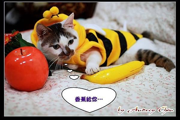 12_IMG_8535_給香蕉.jpg