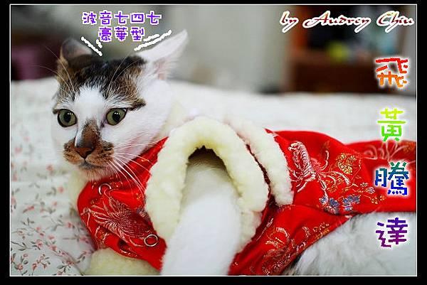 IMG_8841_飛黃騰達.JPG