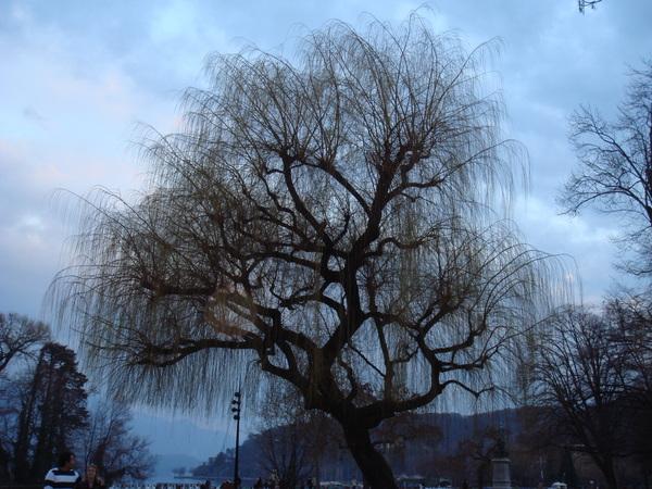 這樹粉神吧~~在安錫運河的某公園裡