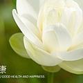 ingredient_lotus2.jpg