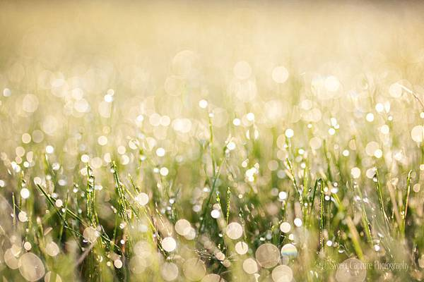 img_7613-grass-dew-bokeh_smw.jpg