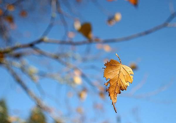 1106_LOC_Leaf.jpg
