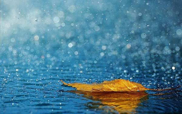leaf_drops_rain_autumn_water_background.jpg