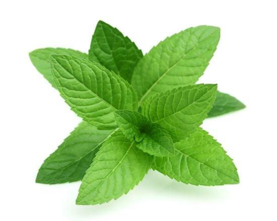 200-PCS-PERENNIAL-herb-mint-seeds-chinese-herb-good-smell-mint-seeds-for-medical-and-eating.jpg_640x640.jpg