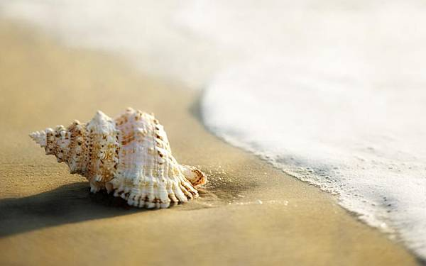 beach-macro-ocean-shell-hd-1080P-wallpaper-middle-size.jpg