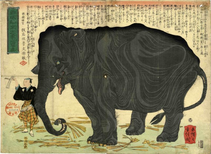西域舶來大象