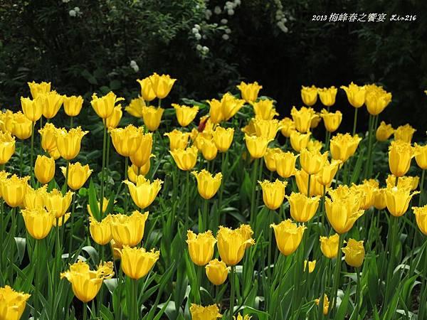 2013 梅峰春之饗宴 (21)-1.jpg