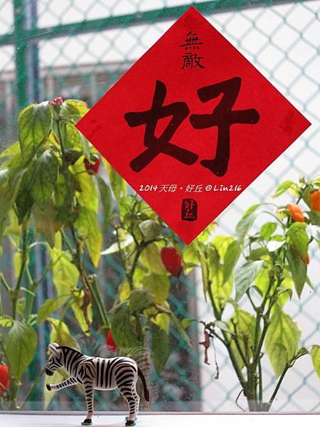2014賞櫻台北行 797