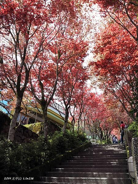 2014太平山公會旅遊 321