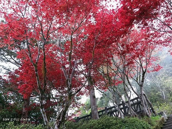 2014太平山公會旅遊 392