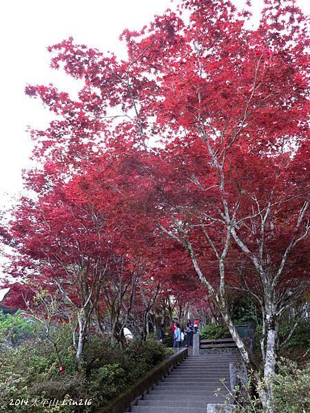 2014太平山公會旅遊 504