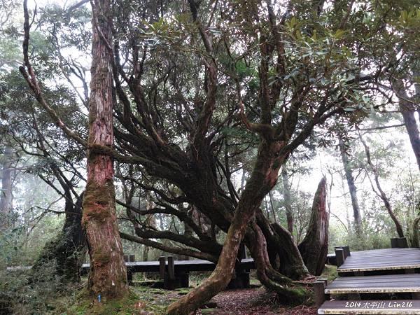 2014太平山公會旅遊 442