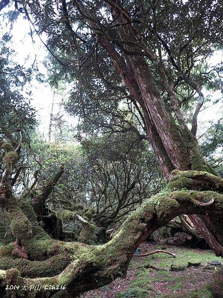 2014太平山公會旅遊 435