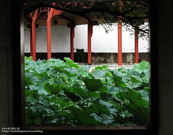 2014六月新竹 (196)