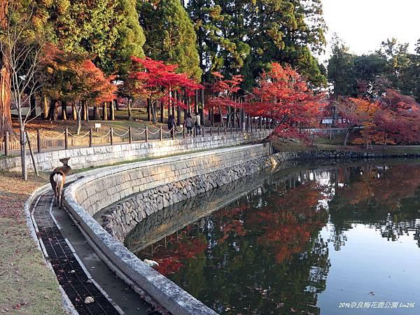 2014京阪神紅葉季 430
