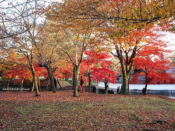 2014京阪神紅葉季 448